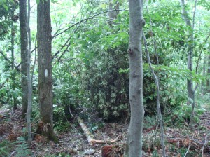 White blaze along the Long Trail